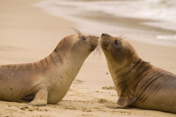 Любите друг друга (26 фото)