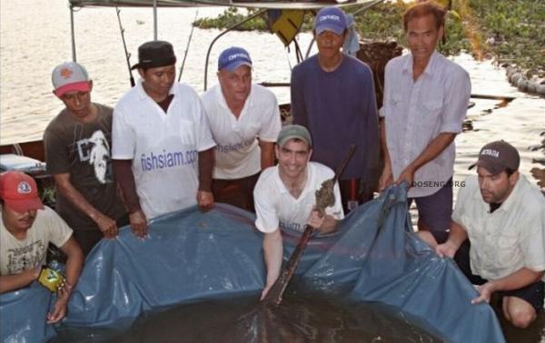 Пойман самый большой в мире скат (2 фото)