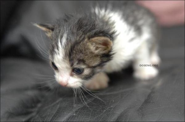 Она стала мамой для котят (6 фото)
