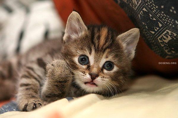 Котята (20 фото)