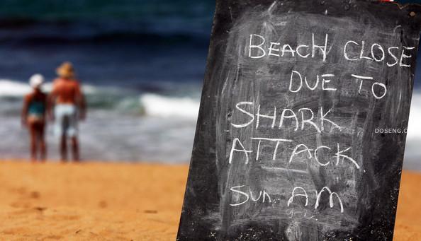 Закрыли пляж Авалон после нападения акул (7 фото)