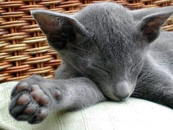 Спящие зверушки (15 фото)