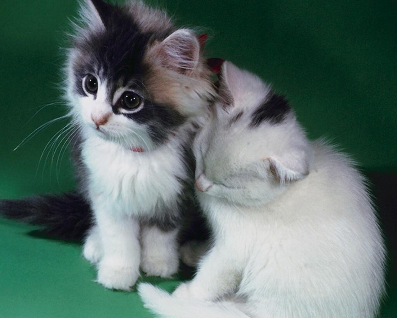 小动物的可爱