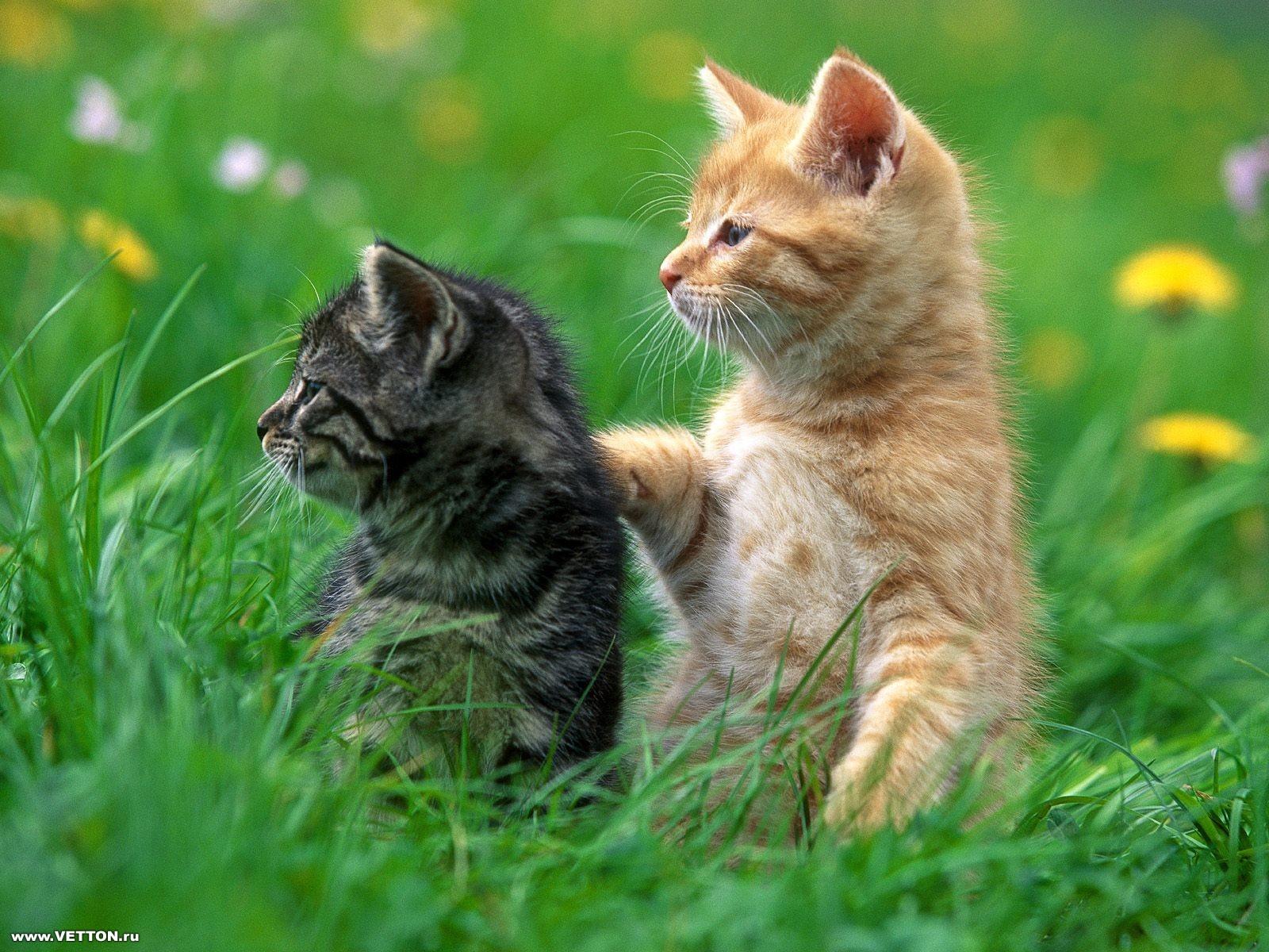 来看看可爱的逗趣小猫(转载)