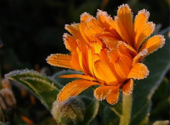 Макросъёмка. Цветы (16 фото)