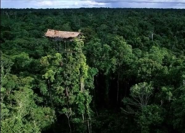 Житие человека на дереве (25 фото)
