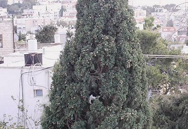Кошачий урожай (7 фото)