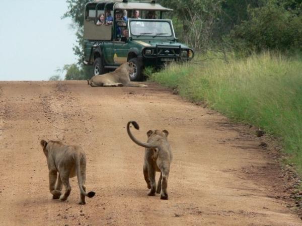 Парк Крюгер - национальная гордость Южной Африки (52 фото)