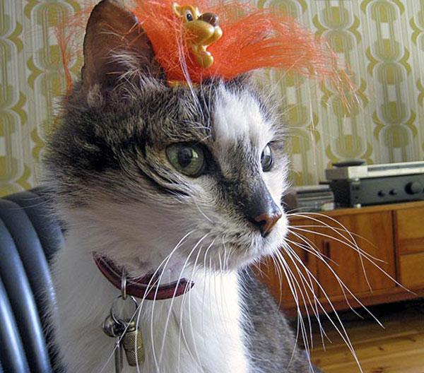Проверка на спокойствие кота (45 фото)