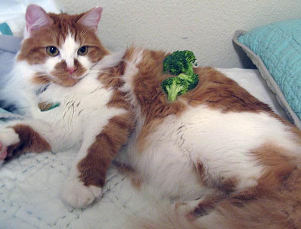 Проверка на спокойствие кота