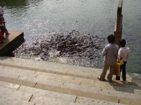 Священный пруд (6 фото)