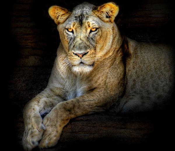 Очень красивые портреты животных (17 фото)