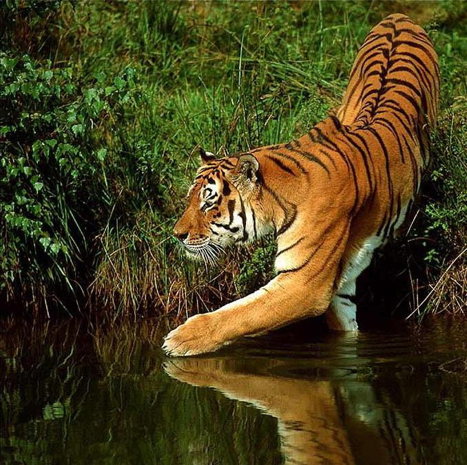 Живые картинки диких животных