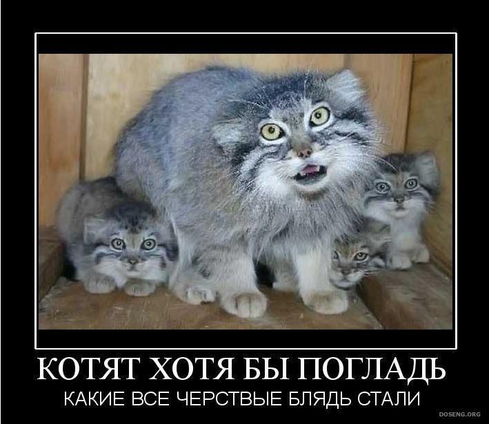 Котят хотя бы погладь
