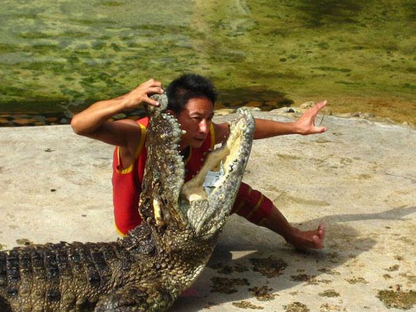 Укротители крокодилов (5 фото)