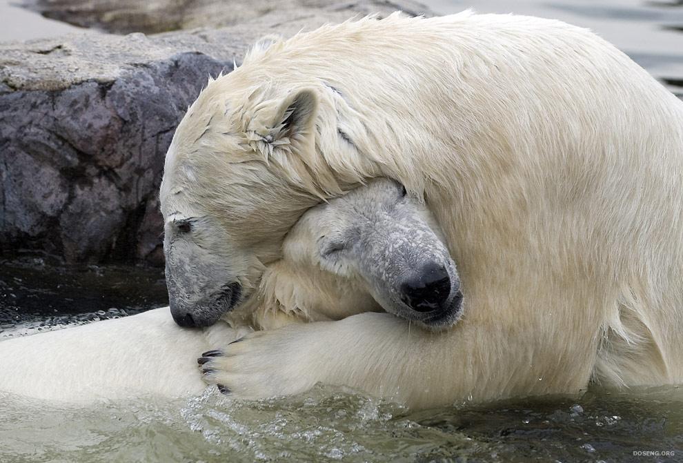 جفتري خرس قطبي m.yukle.mobi