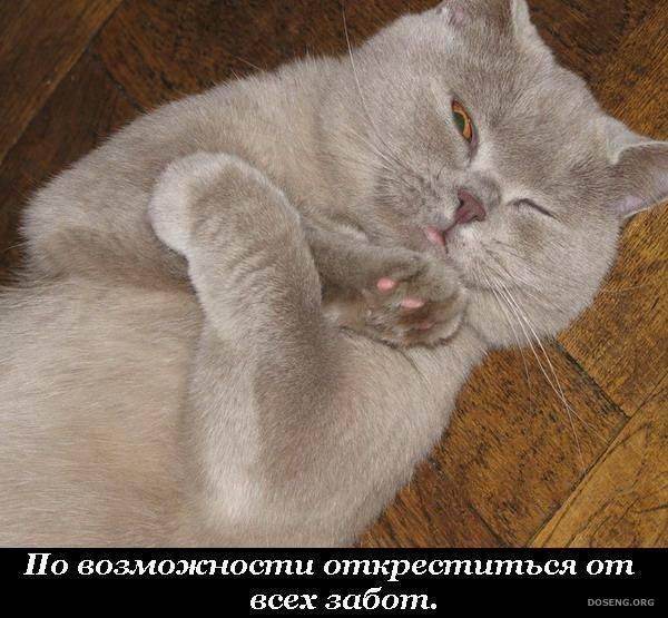 Что входит в обязанности домашних котов (22 фото)