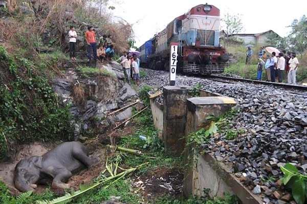 Слоненка сбил поезд (7 фото)