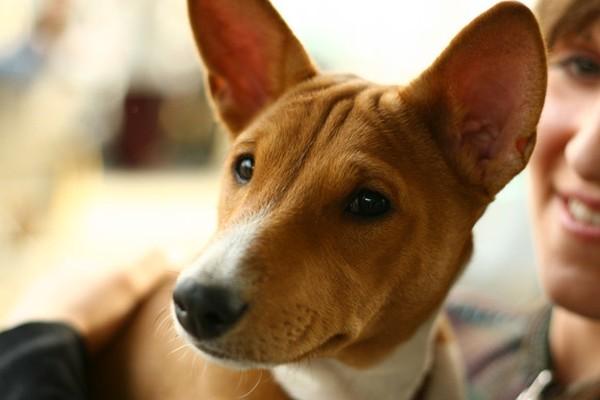 Фото с выставки собак (30 фото)