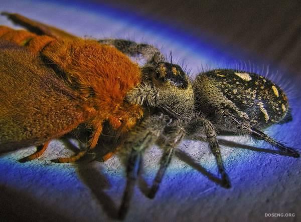 Сто фотографий насекомых (99 фотографий)