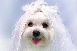 Мальчика женили на собаке, чтобы спасти от смерти