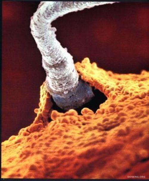 kak-pochuvstvovat-sperma-popala