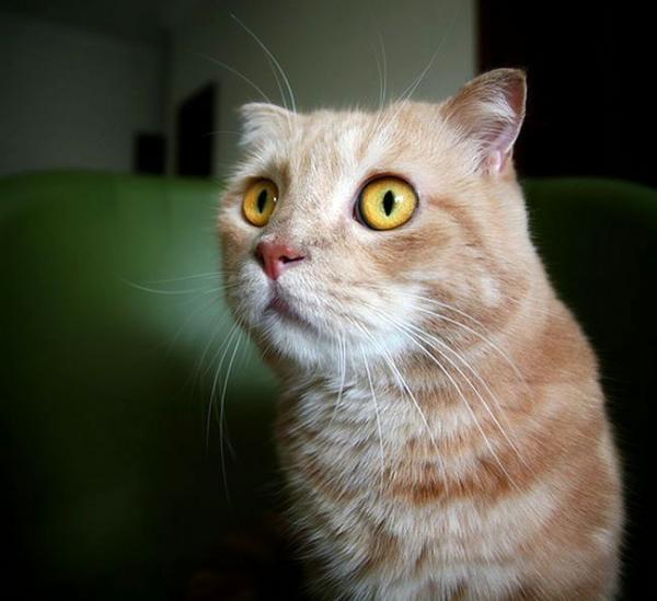 Прикольные коты )) (43 фото)