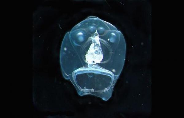Обитатели подводного мира (31 фото)