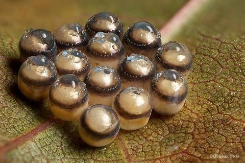 Яица различных насекомых (21 фото)