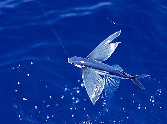 летать рыбалка