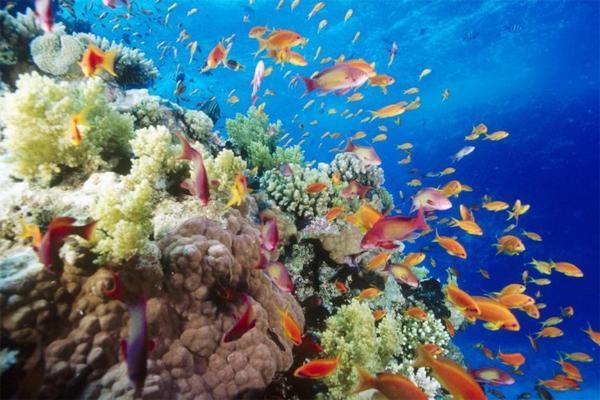 澳大利亚大堡礁的海底世界o美呆了