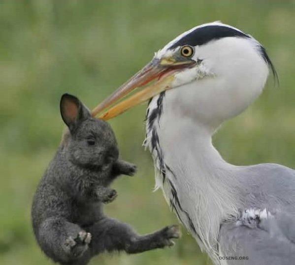 Жесть! Поедание кролика ( (5 фото)