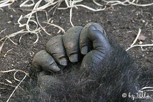 Лапки животных (10 фото)