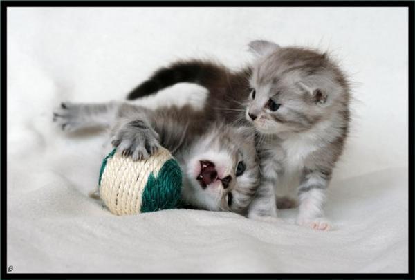 Котята (17 фото)