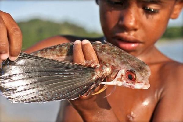 Летучие рыбы (8 фото)