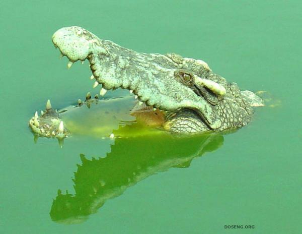 10 интересных фактов о жизни животных
