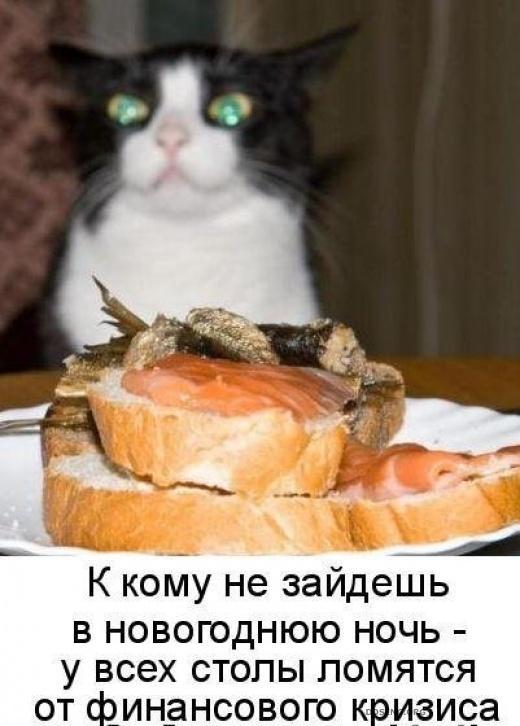 Прикольные картинка животных с подписями новые очень смешные