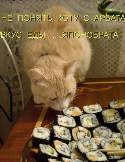 Смешные картинки котиков с подписью