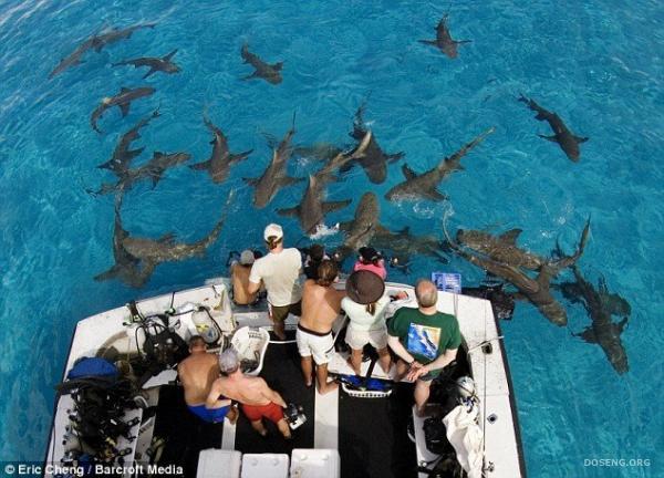 Акулы (4 фото)
