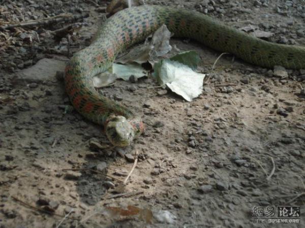 Змея съела лягушонка (20 фото)