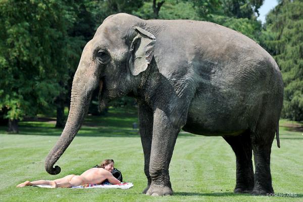 Очень любопытный слон (2 фото)