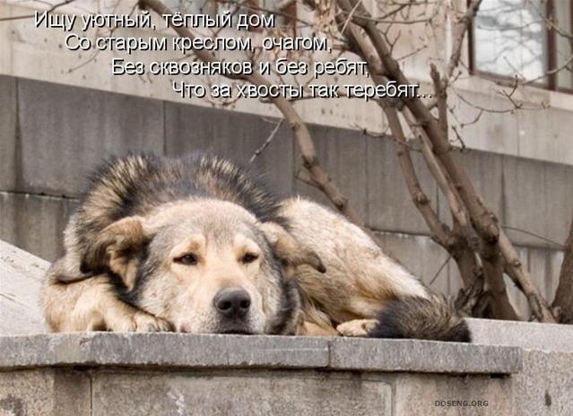 Трогательные картинки с животными и с надписями, иконы