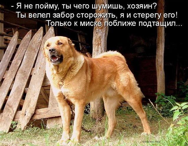 фото с надписью собака сейчас вспоминают ностальгией