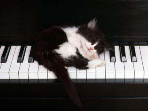 Спящие котоейки (20 фото)