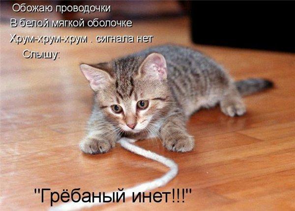 Животный позитив в картинках :)  (24 фото)