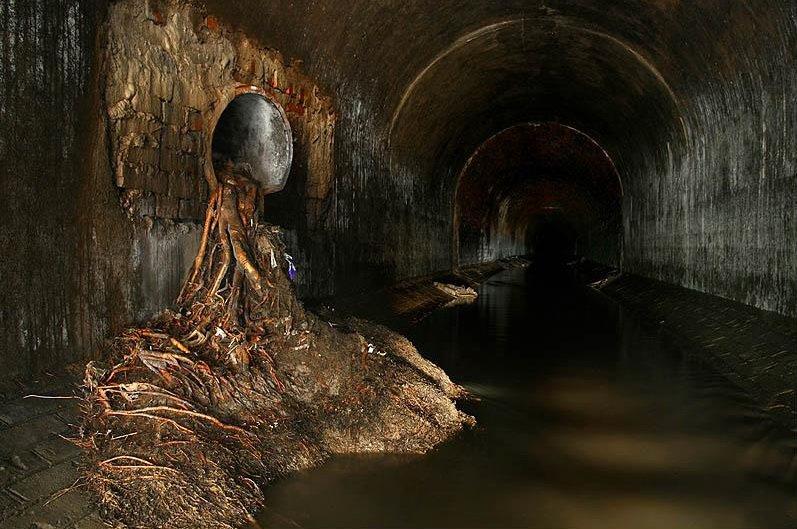 если такой фотографии подземной москвы биологические признаки