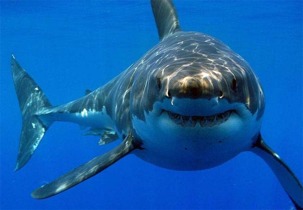 Необычные находки в желудках акул