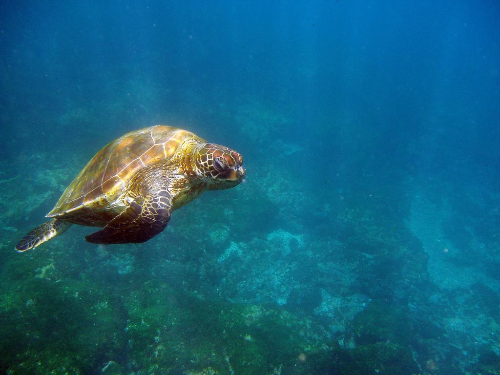Прекрасный подводный мир 12 фото