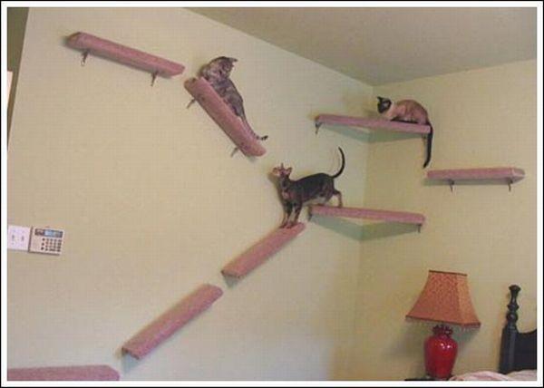Дорожка для кошки (36 фото)