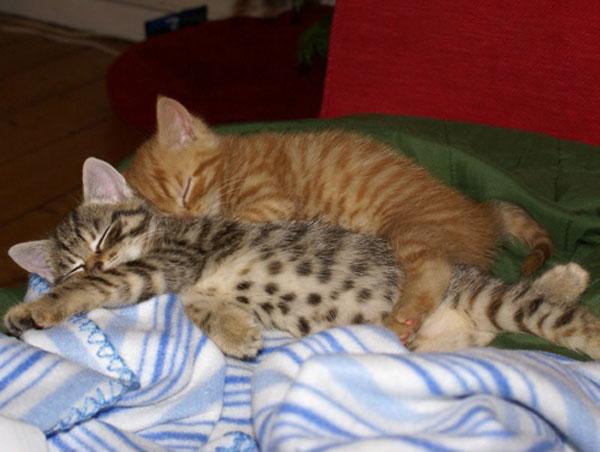Спящие котики 19 фото